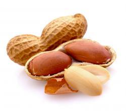 Burský ořech