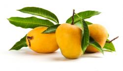 Mangovník indický (amchyr)