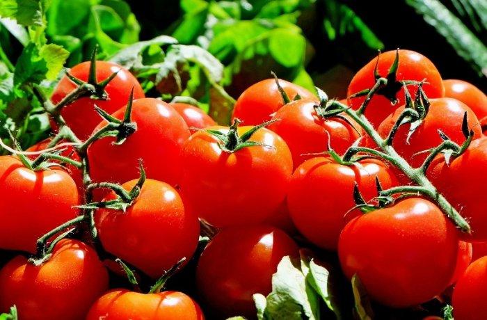 Co s nadměrnou úrodou rajčat?