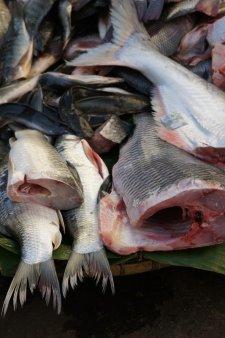 Obrázek lekce Příprava ryb