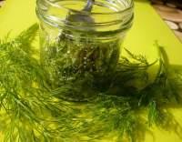 Čerstvý kopr naložený v soli